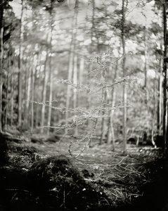 'Bright Three' 24x30 cm Tintype landschap in het Spandersbos gemaakt met het wetplate collodium procedé